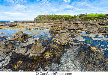Petrified forest - Ancient petrified forest on the coast at...