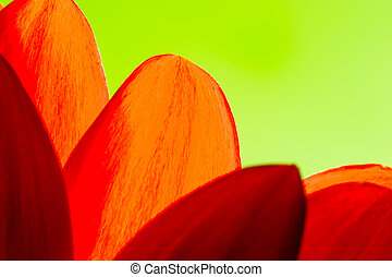 Bright Orange and Red Chrysanthemum Flower Petals