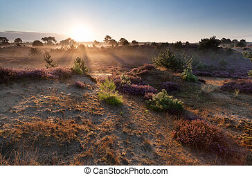 summer misty sunrise over sand dunes