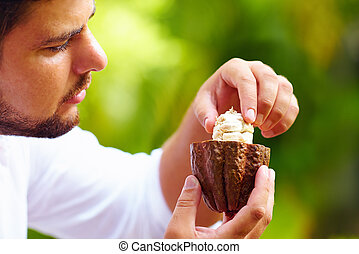 man taking out beans from cutted cocoa pod