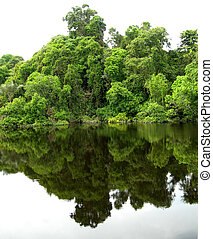 Rain Forest mirrored in a lagoon on Amazon in Brazil -...