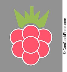Raspberry fruit. Vector illustration