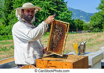 Beekeeper on apiary - Beekeeper pulling frame from the hive