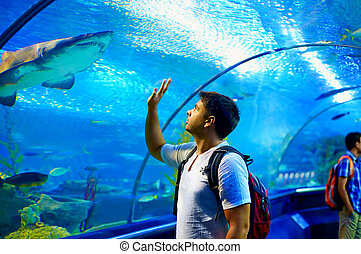 curious tourist watching with interest on shark in...