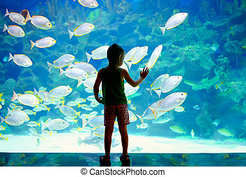 little boy, kid watching the shoal of fish swimming in...