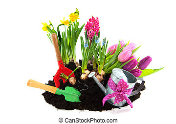 Gardening in spring - gardening with flower bulbs and tools...