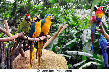 Parrots - A group of macaws perched on a tree branch