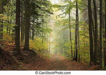 Autumn forest - Path through the enchanted autumn forest