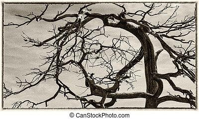 árbol, rama,