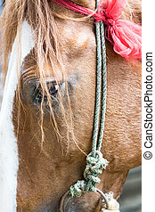 Closeup of a red horse