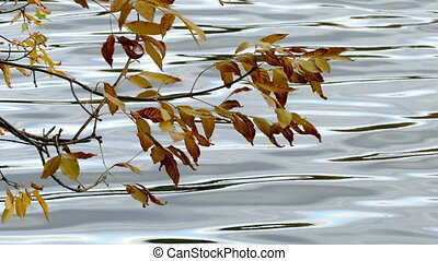 Yellow leaves and water in a pond in autumn
