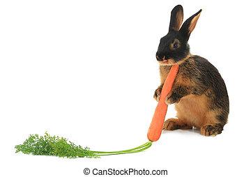 conejo,
