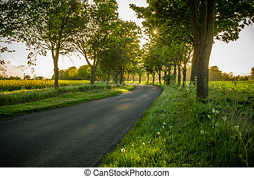Tree Lined road - A tree lined road in the English...