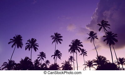 Summer time palm tree sunset timelapse - Timelapse summer...