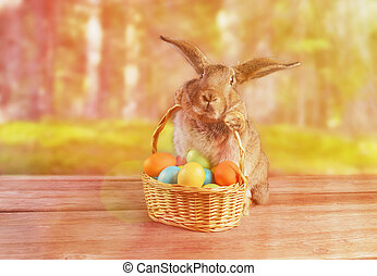 Easter rabbit sits with basket outdoor - Easter rabbit sits...