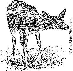 Deer, vintage engraving - Deer, vintage engraved...