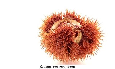 Chestnuts with shell isolated on white background