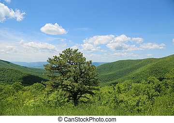 Beautiful West Virginia - Solitary tree in the lovely hills...