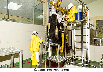 Slaughterhouse Cattle Section - Abattoir Butchers Working On...