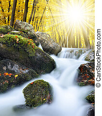 mountain creek - Autumnal forest with mountain creek in...
