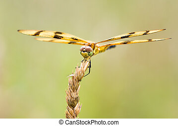 Halloween Pennant III - Frontal Portrait of a Halloween...