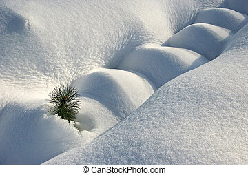 Small pine tree covered with snow One pine peeking out of...