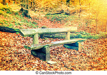 Lonely wooden bench in autumn forest