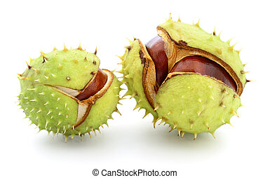 Chestnuts in husk - Chestnuts in husk isolated on white...