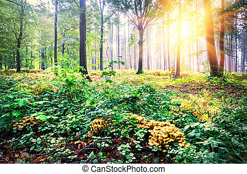 Beautiful landscape with sunset in autumn forest