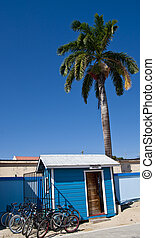 Belize Immigration Office - A small shack under a palm tree...