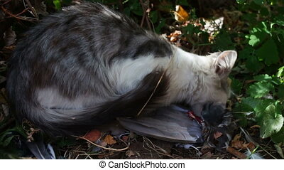 Cat eats a pigeon in the grass - Wild homeless white with...