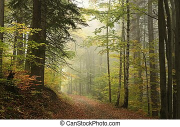 Path through the autumn forest - Path through the enchanted...