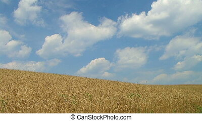 Wheat Against Clouds Time Lapse