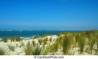 playa salvaje - vegetaci?n en la duna que hay en la playa