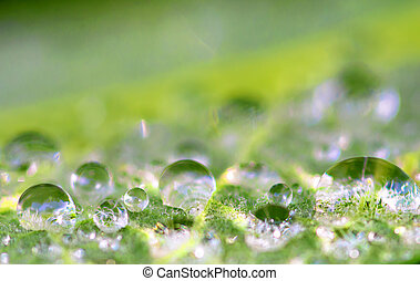 raindrop - closeup view of raindrop