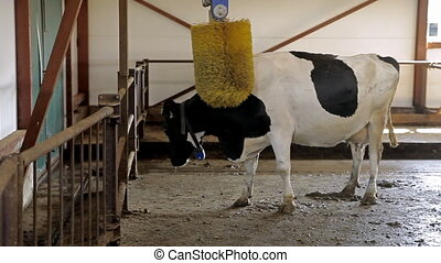 A scratcher for cows - Farm for breeding cows. Special...