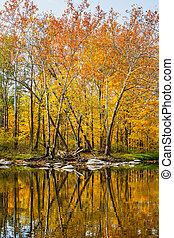 Reflected Splendor - Trees along the bank of Montgomery...