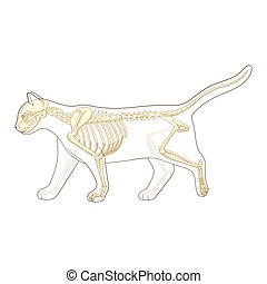 Cat skeleton veterinary vector illustration
