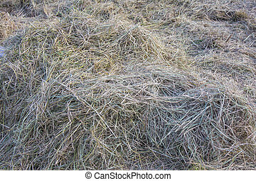 asciutto, fieno, erba, fondo