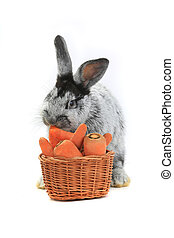 Rabbit - rabbit with a carrot basket on white background