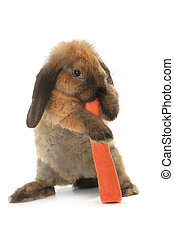 Rabbit - rabbit with a uvula and carrots on a white...