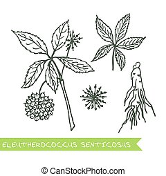 Handdrawn Illustration - Health and Nature Set -...