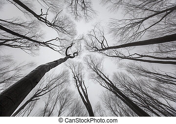 Trees Without Leaves - Look up. - Late autumn forest with...