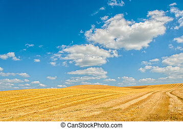 harvested field under cloudy sky