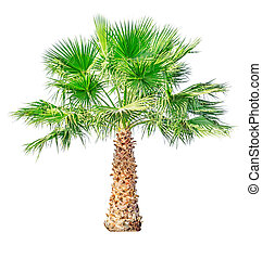 Palm tree isolated on white background. File contains a...