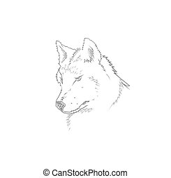 Head of a grey wolf.Vector illustration