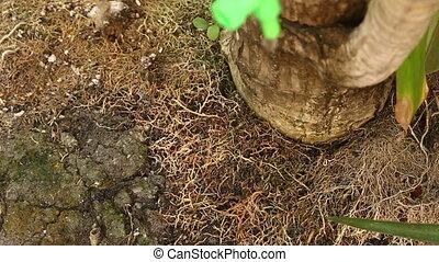 Watering tree make water drops - Watering tree in jardiniere...