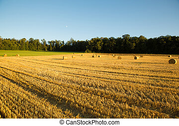 Evening after the Harvest - Evening after the Harvest in...