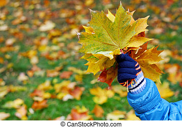 Walks in the fall season - The image of hands of a child in...