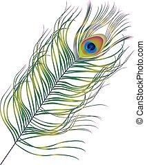 Peacock feather vector art